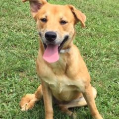 Holly is an active female mix approximately a year old and 30 lbs. She's a cheerful girl that loves to play.