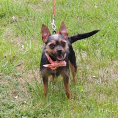 Adopted! Betty is a sassy, scruffy terrier mix. She's about 2-3 years old and 10 pounds. - Spring 2019