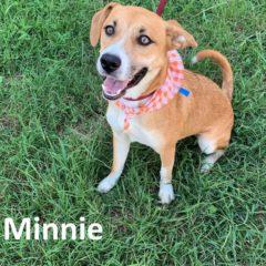 Fall 2019: Minnie